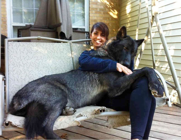 huge-dogs-feel-small-20__605