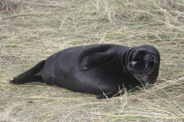 01-01-Black-pup
